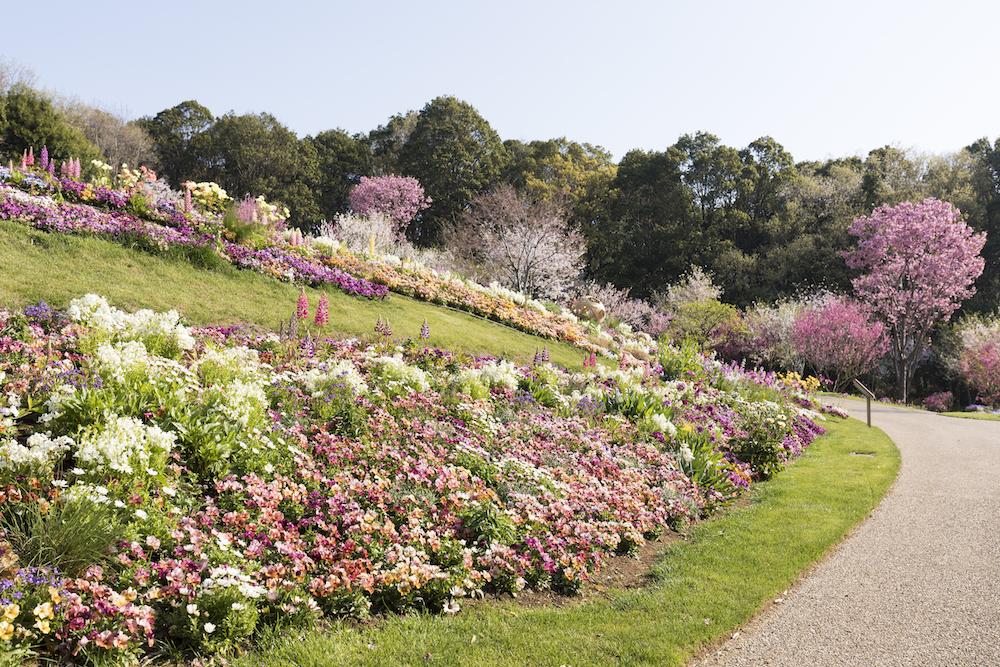 横浜ガーデンネックレス 公園 花畑