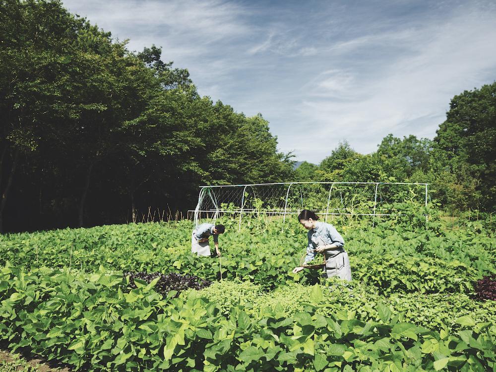 星野リゾート リゾナーレ那須 子連れ GoToキャンペーン 田んぼ 農業体験 子連れ 赤ちゃん 家族旅行 体験 アクティビティ アグリツーリズモ