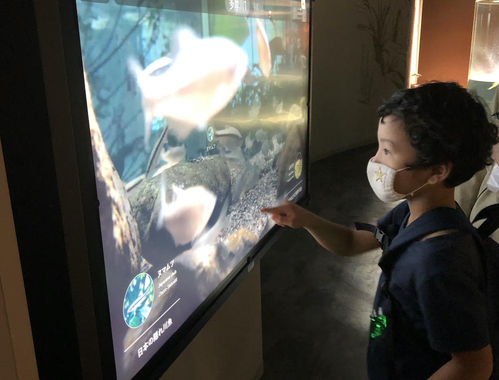 カワスイ 川崎水族館 リンネレンズスクリーン 水中ライブカメラ 子連れ 子供