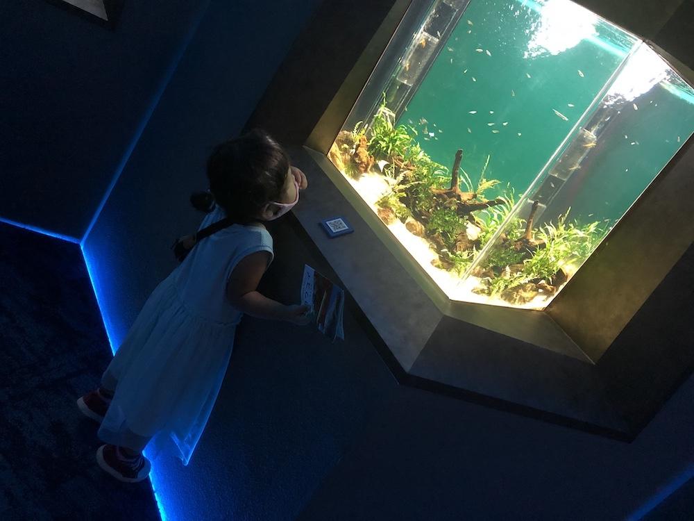 カワスイ 川崎水族館 子連れ オセアニア・アジアゾーン