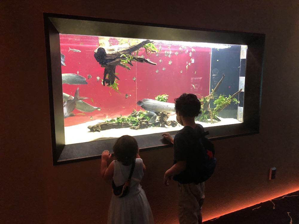 カワスイ 川崎水族館 アフリカゾーン 子連れ
