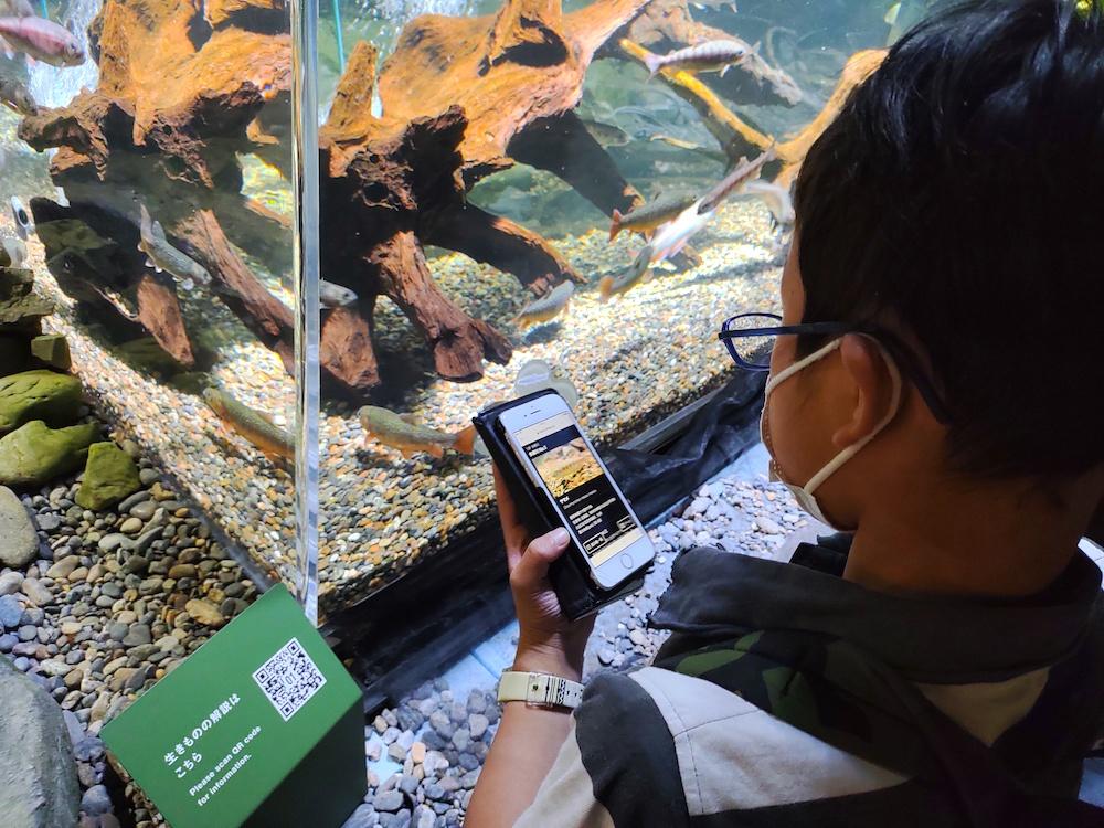 カワスイ 川崎水族館 水族館 川崎 子連れ お出かけ 子供連れ ナマズ たまずん QRコード