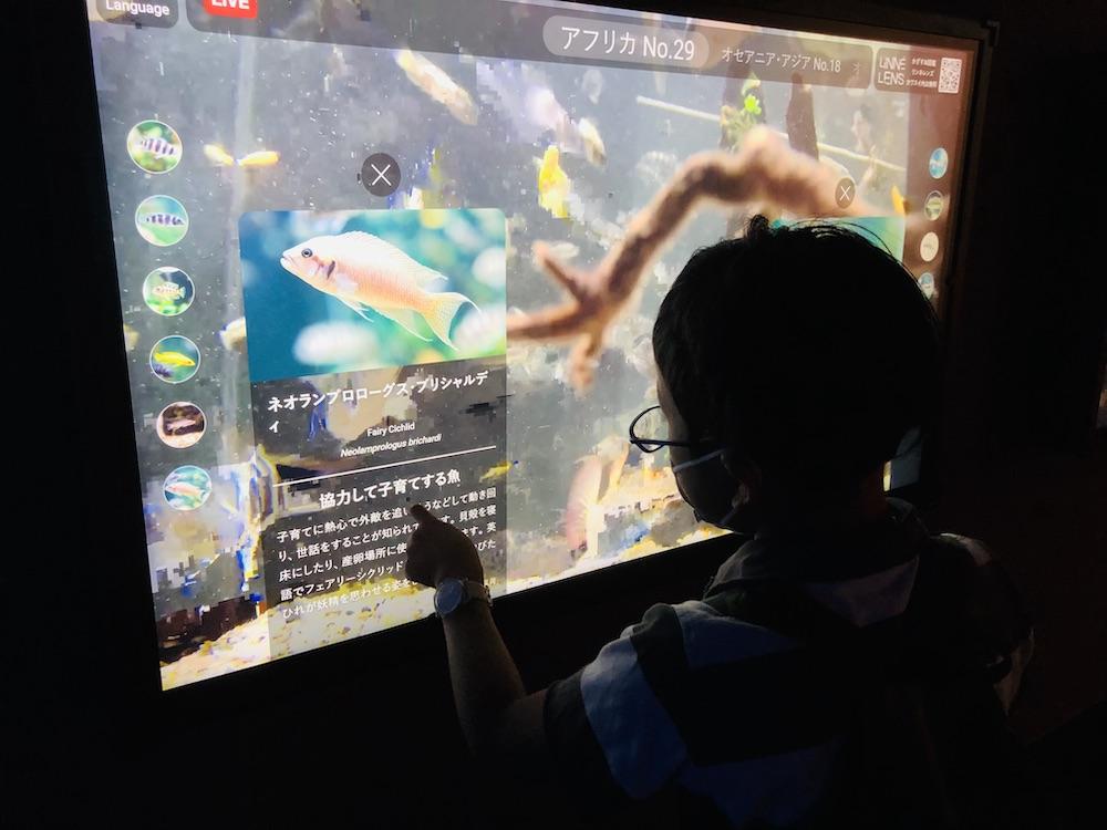 カワスイ 川崎水族館 水族館 川崎 子連れ お出かけ 子供連れ ナマズ たまずん リンネレンズスクリーン