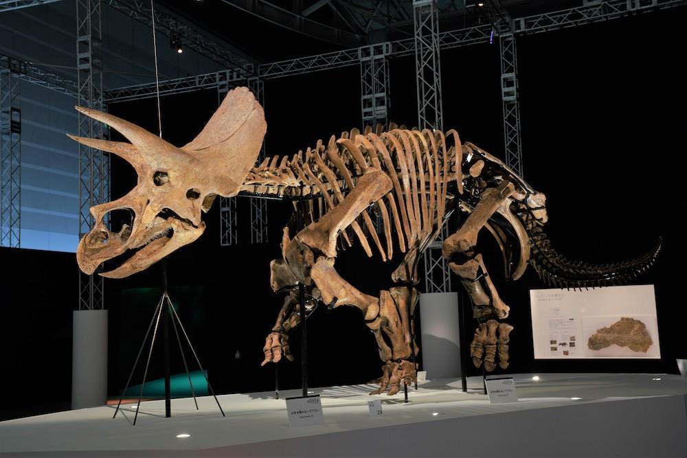DinoScience 恐竜科学博 ソニー ララミディア大陸 恐竜展 みなとみらい パシフィコ横浜 トリケラトプス 恐竜の化石 化石 全身骨格 ヒューストン自然科学博物館 レイン