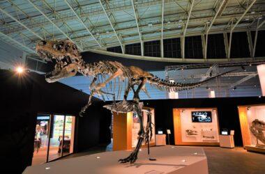 恐竜科学博 展示 パシフィコ横浜 ゴルゴサウルス