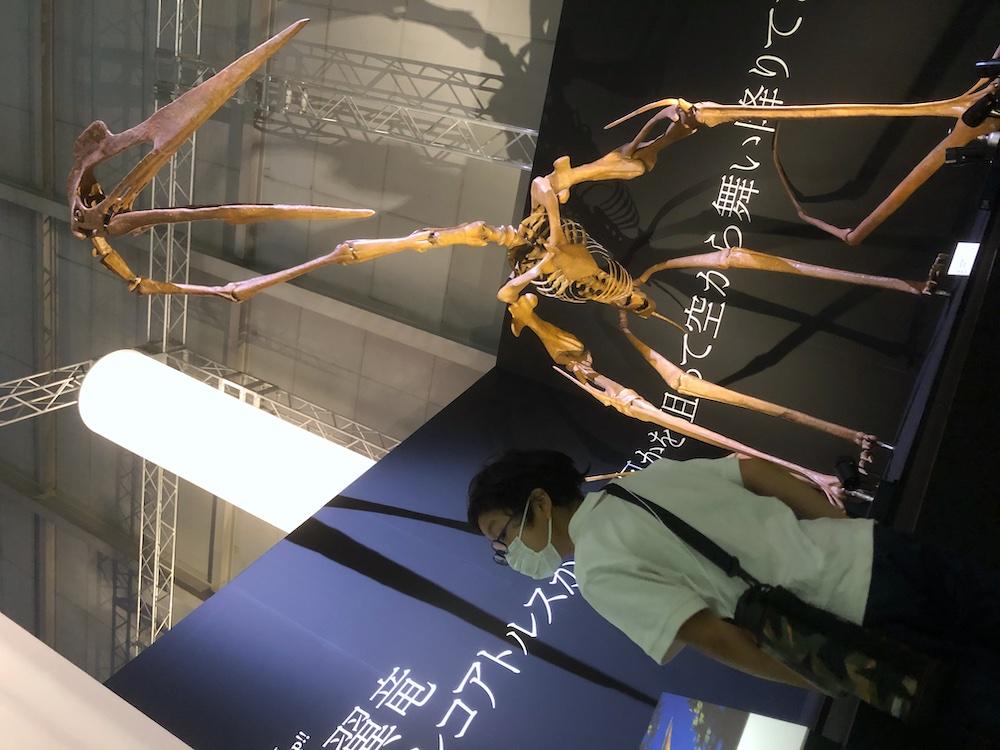DinoScience 恐竜科学博 ソニー ララミディア大陸 恐竜展 みなとみらい パシフィコ横浜 トリケラトプス ケツァルコアトルス