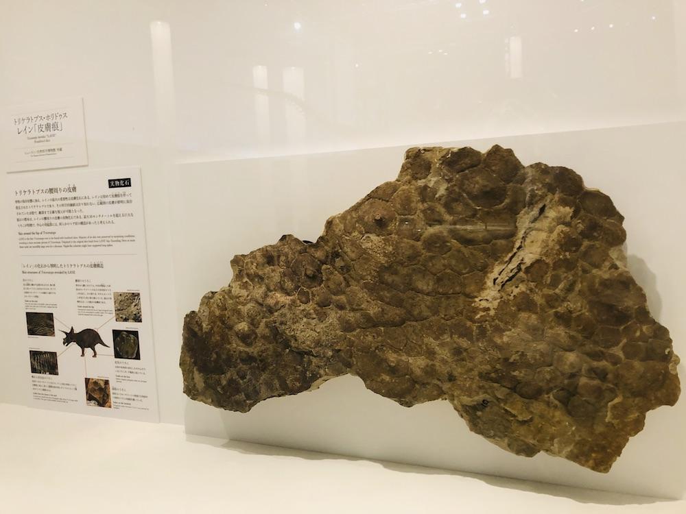 DinoScience 恐竜科学博 ソニー ララミディア大陸 恐竜展 みなとみらい パシフィコ横浜 トリケラトプス 皮膚痕 化石 恐竜の化石 日本初上陸