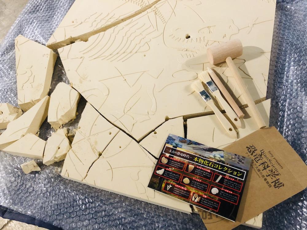 DinoScience 恐竜科学博 ソニー ララミディア大陸 恐竜展 みなとみらい パシフィコ横浜 トリケラトプス 化石発掘体験 化石 アクティビティ ワークショップ