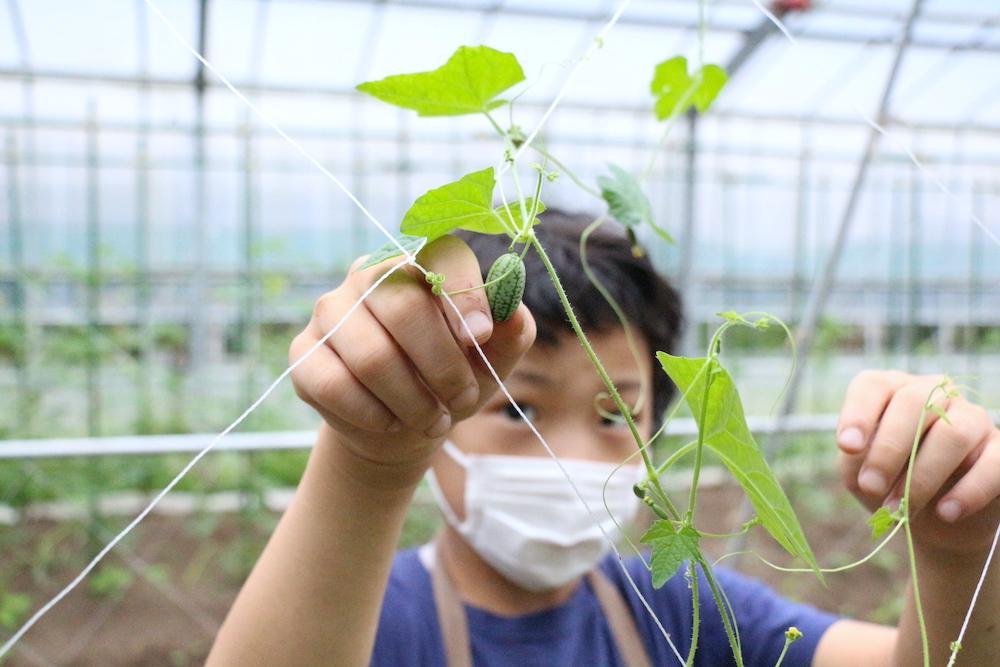 自由研究 小学生 小学生むけ 夏休みの自由研究 自由研究小学生 テーマ リゾナーレ那須 星野リゾート 野菜 収穫 農家体験 農家の仕事 マイクロきゅうり