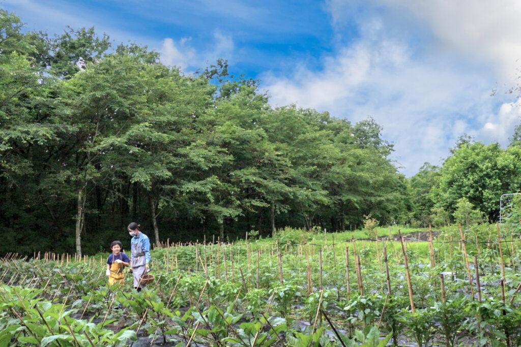 自由研究 小学生 小学生むけ 夏休みの自由研究 自由研究小学生 テーマ リゾナーレ那須 星野リゾート 野菜 収穫 農家体験 農家の仕事 収穫体験